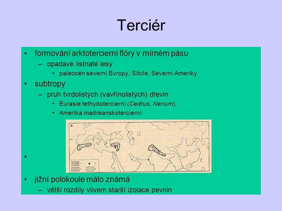 formování arktotercierní flóry v mírném pásu –opadavé listnaté lesy paleocén severní Evropy, Sibiře, Severní Ameriky subtropy –pruh tvrdolistých (vavř