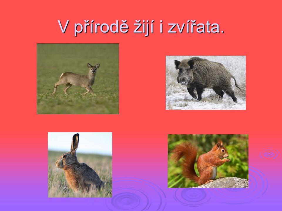 V přírodě žijí i zvířata.