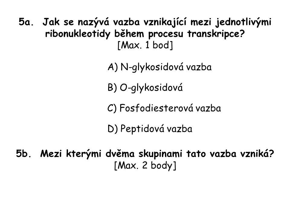 5a. Jak se nazývá vazba vznikající mezi jednotlivými ribonukleotidy během procesu transkripce.