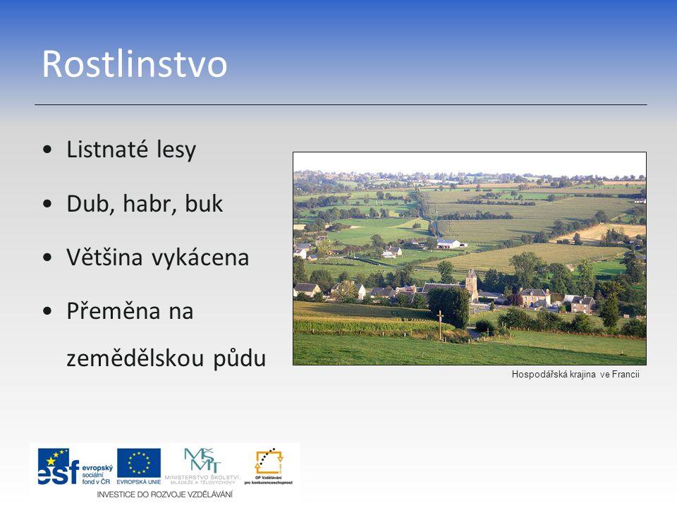 Rostlinstvo Listnaté lesy Dub, habr, buk Většina vykácena Přeměna na zemědělskou půdu Hospodářská krajina ve Francii
