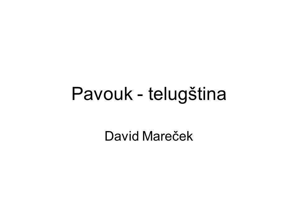 Pavouk - telugština David Mareček