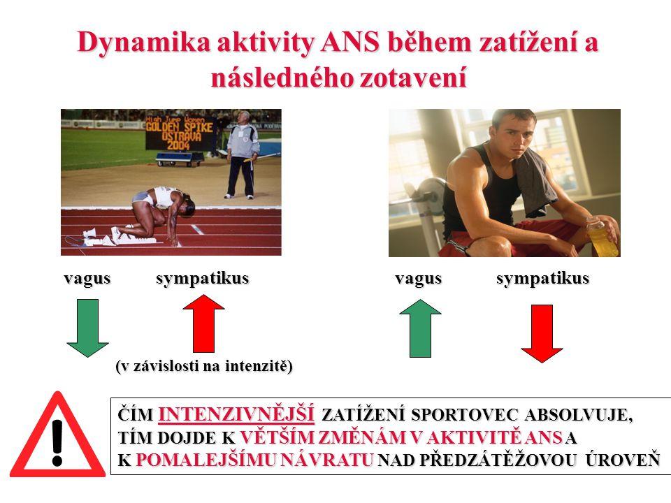 Dynamika aktivity ANS během zatížení a následného zotavení vagus sympatikus vagus sympatikus (v závislosti na intenzitě) ČÍM INTENZIVNĚJŠÍ ZATÍŽENÍ SP