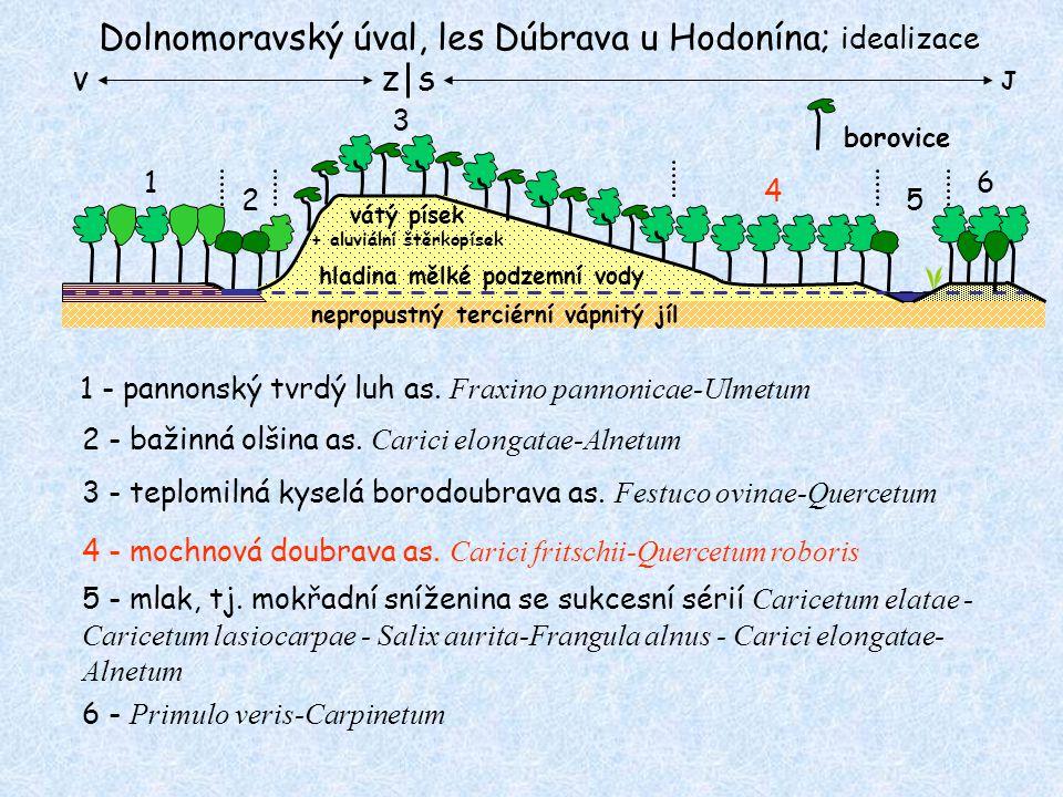 Dolnomoravský úval, les Dúbrava u Hodonína; idealizace nepropustný terciérní vápnitý jíl 1 vátý písek + aluviální štěrkopísek hladina mělké podzemní vody 2 3 4 6 5 1 - pannonský tvrdý luh as.