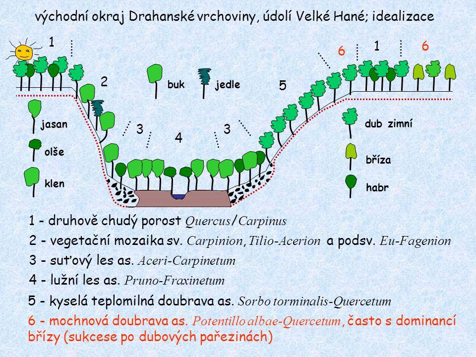 východní okraj Drahanské vrchoviny, údolí Velké Hané; idealizace 1 2 3 4 3 5 6 16 1 - druhově chudý porost Quercus / Carpinus 2 - vegetační mozaika sv.