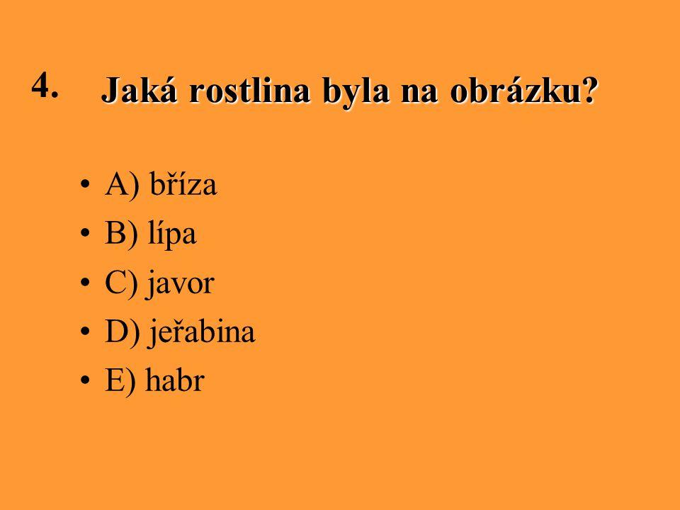 Jaká rostlina byla na obrázku? 4. A) bříza B) lípa C) javor D) jeřabina E) habr