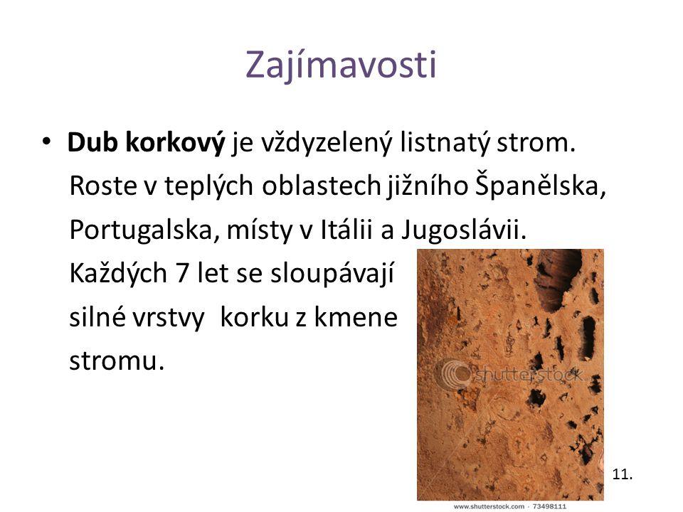 Zajímavosti Dub korkový je vždyzelený listnatý strom. Roste v teplých oblastech jižního Španělska, Portugalska, místy v Itálii a Jugoslávii. Každých 7