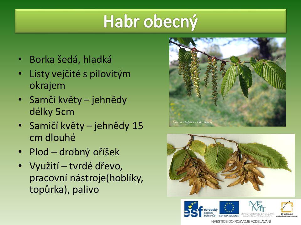 Mohutný strom s košatou korunou Borka hladká šedá, ve stáří hnědošedá, rozpraskaná Listy srdčité, pilovité, řapíkaté Květy žluté v převislých květenstvích Plod – tvrdý oříšek Využití – množství nektaru pro včely Měkké trvanlivé dřevo – v řezbářství a truhlářství Působí proti kašli, protizánětlivé účinky, při horečkách a onemocnění ledvin, podporuje chuť k jídlu Stala se českým národním stromem Ratolesti lípy jsou na státní pečeti i na prezidentské standartě
