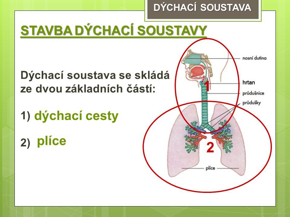 STAVBA DÝCHACÍ SOUSTAVY Dýchací soustava se skládá ze dvou základních částí: 1) 2) 1 2 dýchací cesty plíce