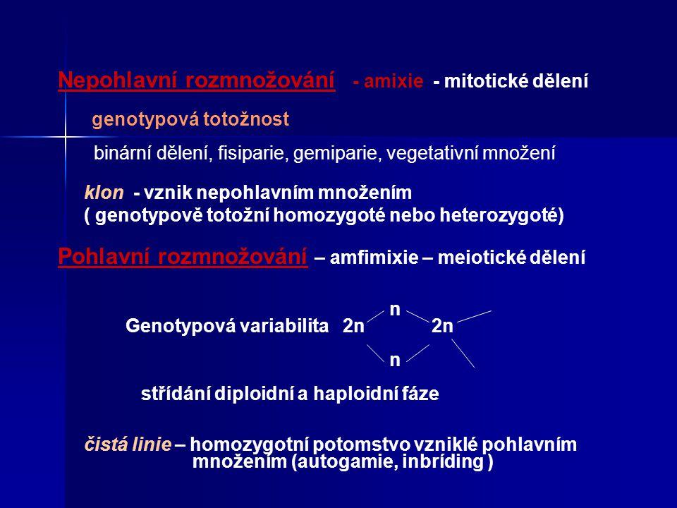 Nepohlavní rozmnožování - amixie - mitotické dělení genotypová totožnost binární dělení, fisiparie, gemiparie, vegetativní množení klon - vznik nepohlavním množením ( genotypově totožní homozygoté nebo heterozygoté) Pohlavní rozmnožování – amfimixie – meiotické dělení n Genotypová variabilita 2n 2n n střídání diploidní a haploidní fáze čistá linie – homozygotní potomstvo vzniklé pohlavním množením (autogamie, inbríding )