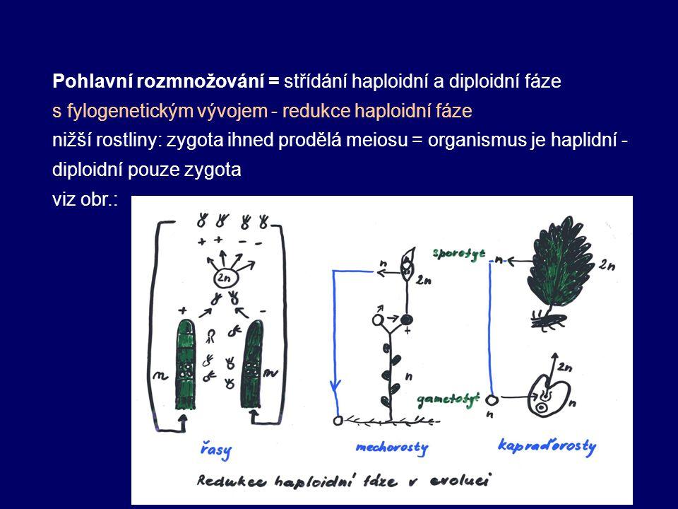 Pohlavní rozmnožování = střídání haploidní a diploidní fáze s fylogenetickým vývojem - redukce haploidní fáze nižší rostliny: zygota ihned prodělá meiosu = organismus je haplidní - diploidní pouze zygota viz obr.: