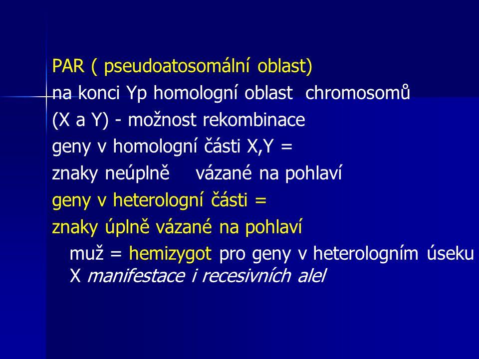 PAR ( pseudoatosomální oblast) na konci Yp homologní oblast chromosomů (X a Y) - možnost rekombinace geny v homologní části X,Y = znaky neúplně vázané na pohlaví geny v heterologní části = znaky úplně vázané na pohlaví muž = hemizygot pro geny v heterologním úseku X manifestace i recesivních alel