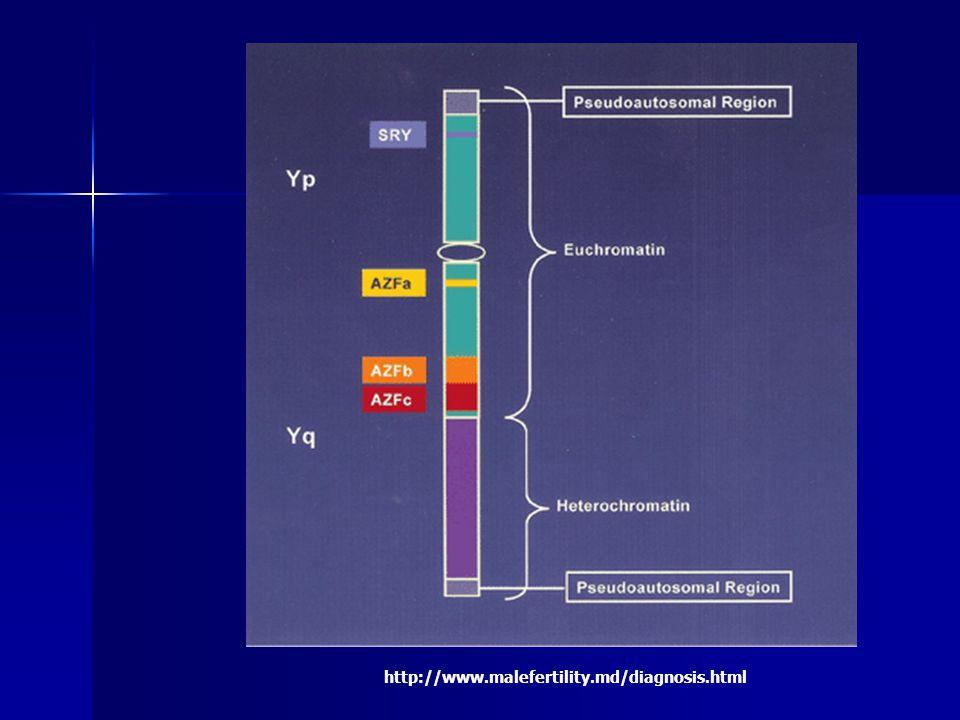 pseudoautozomální oblast (homologní) crossing over v meioze Yp Xp c.o.