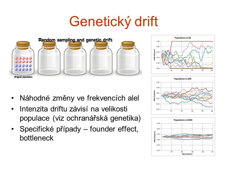 Genetický drift Náhodné změny ve frekvencích alel Intenzita driftu závisí na velikosti populace (viz ochranářská genetika) Specifické případy – founde