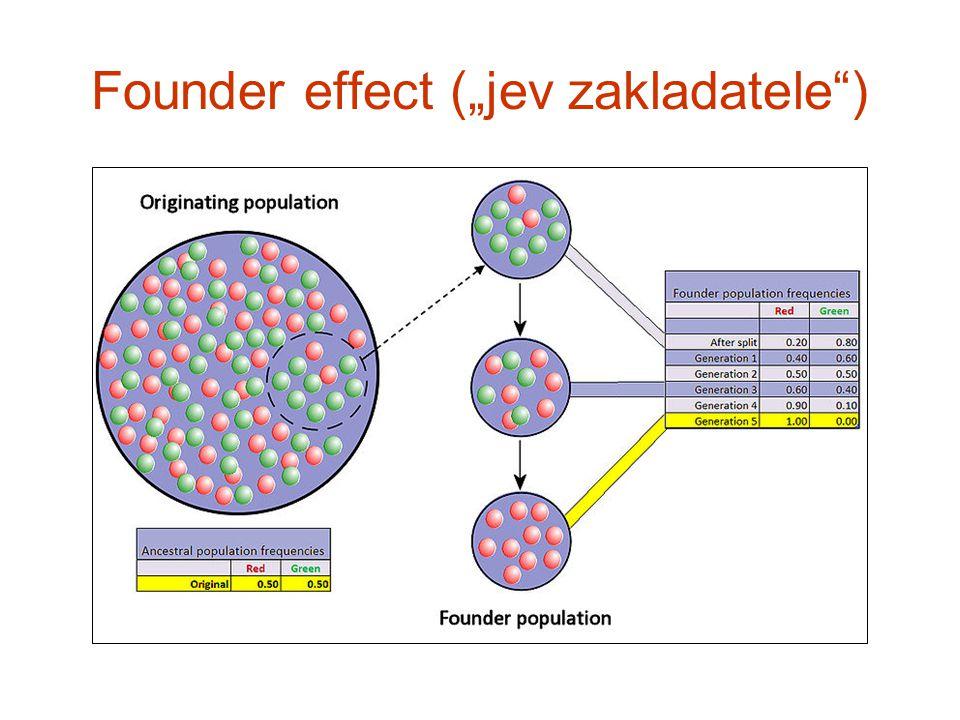 "Founder effect (""jev zakladatele"")"