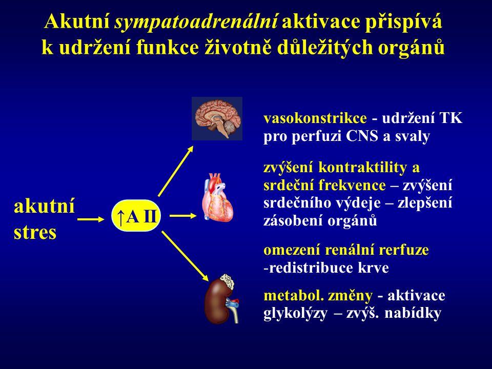 Akutní sympatoadrenální aktivace přispívá k udržení funkce životně důležitých orgánů vasokonstrikce - udržení TK pro perfuzi CNS a svaly zvýšení kontraktility a srdeční frekvence – zvýšení srdečního výdeje – zlepšení zásobení orgánů omezení renální rerfuze -redistribuce krve metabol.