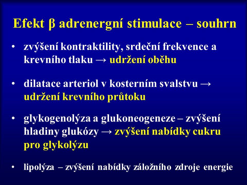 Efekt β adrenergní stimulace – souhrn zvýšení kontraktility, srdeční frekvence a krevního tlaku → udržení oběhu dilatace arteriol v kosterním svalstvu