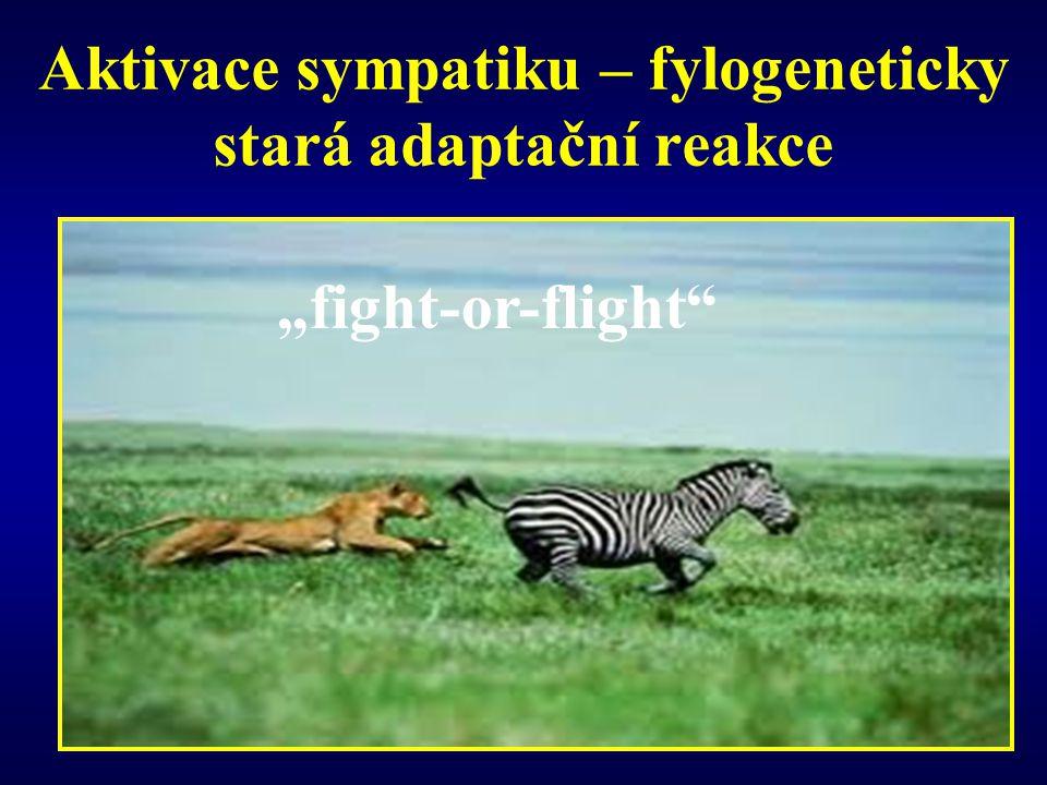 """Aktivace sympatiku – fylogeneticky stará adaptační reakce """"fight-or-flight"""