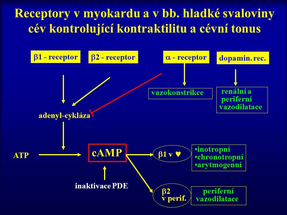Receptory v myokardu a v bb. hladké svaloviny cév kontrolující kontraktilitu a cévní tonus  1 - receptor  2 - receptor  - receptor dopamin. rec. ad
