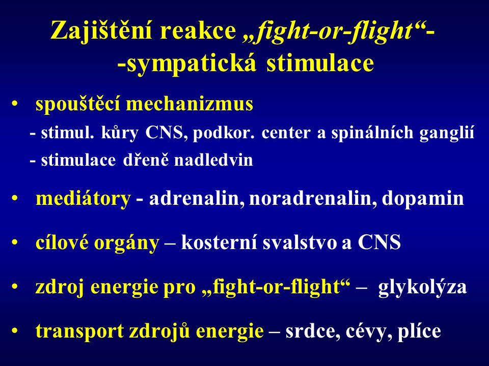 """Zajištění reakce """"fight-or-flight""""- -sympatická stimulace spouštěcí mechanizmus - stimul. kůry CNS, podkor. center a spinálních ganglií - stimulace dř"""