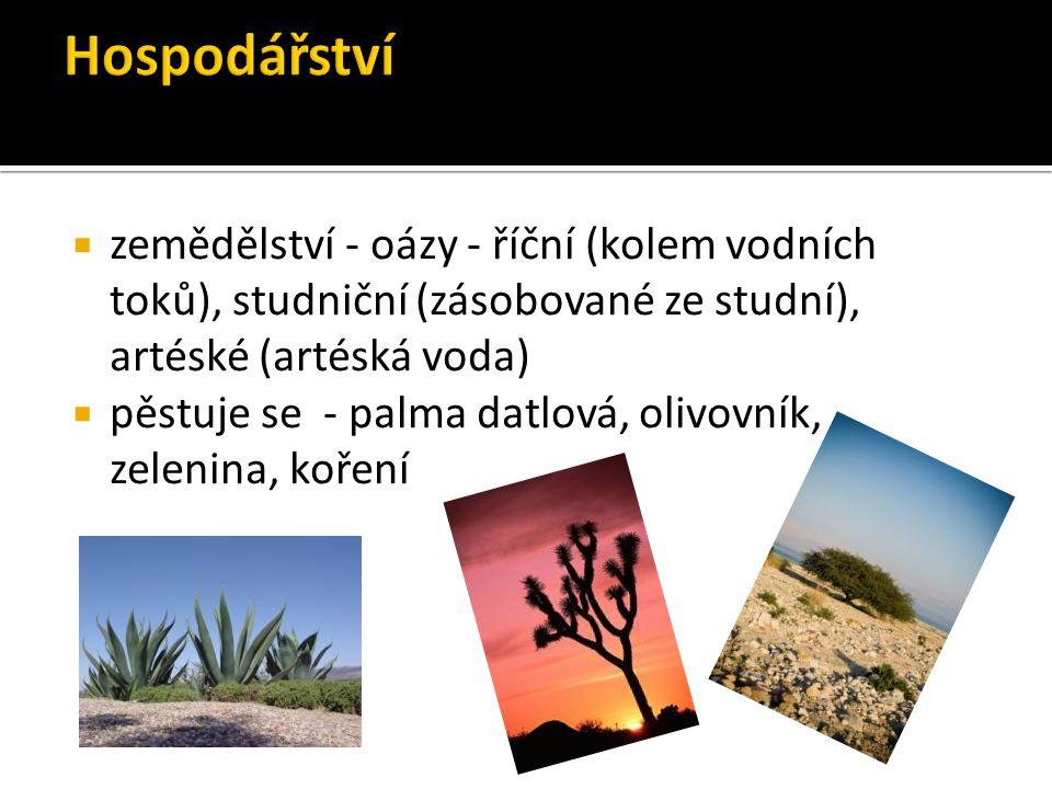  zemědělství - oázy - říční (kolem vodních toků), studniční (zásobované ze studní), artéské (artéská voda)  pěstuje se - palma datlová, olivovník, z