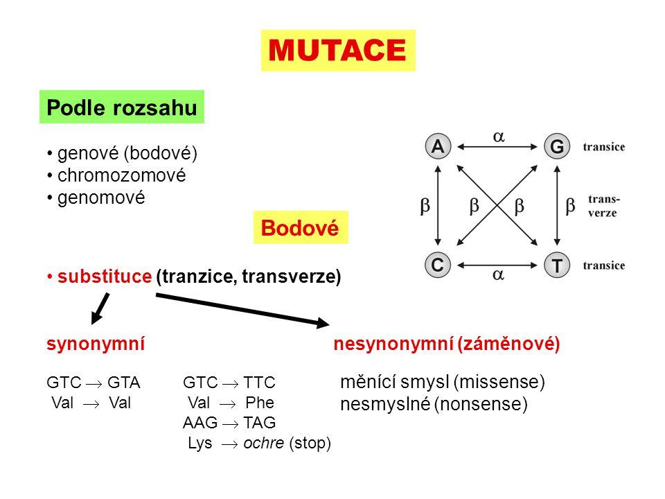 indels  posunutí čtecího rámce }  změna četnosti alely mutací velmi pomalá inzerceACGGT  ACAGGT deleceACGGT  AGGT Bodové zpětné mutace: frekvence zpravidla 10  nižší rekurentní (opakované) mutace  mutační tlak: např.