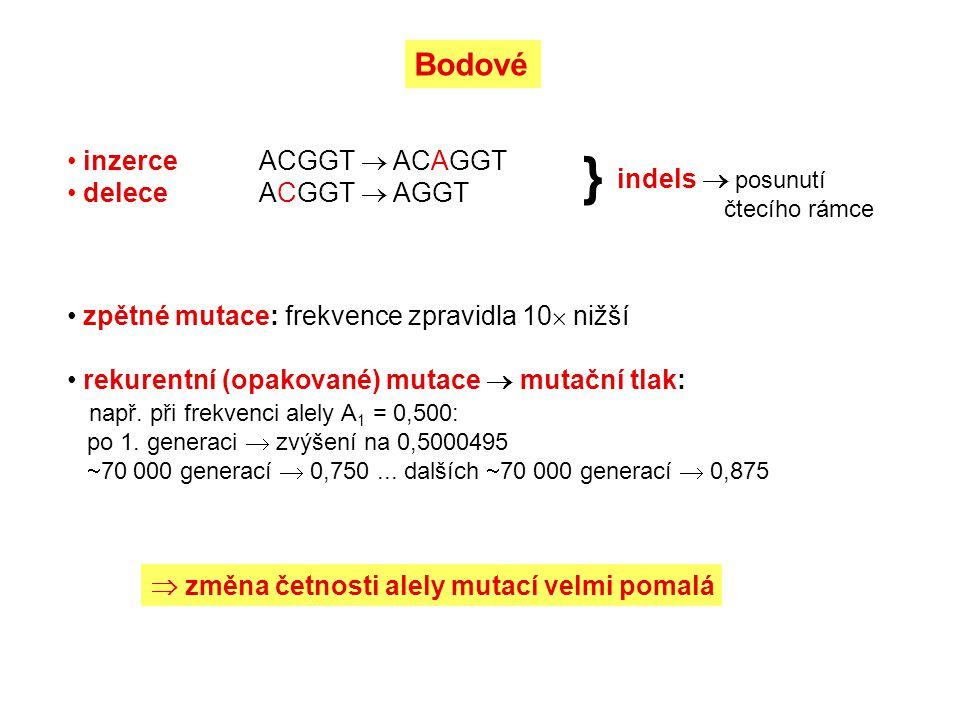 inverze pericentrické paracentrické translokace fúze a disociace (robertsonské translokace) reciproké translokace celých ramen (WART) myš domácí Chromozomové (chr.