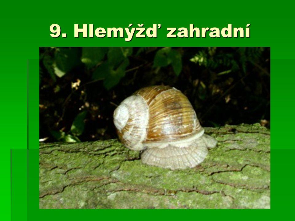 9. Hlemýžď zahradní