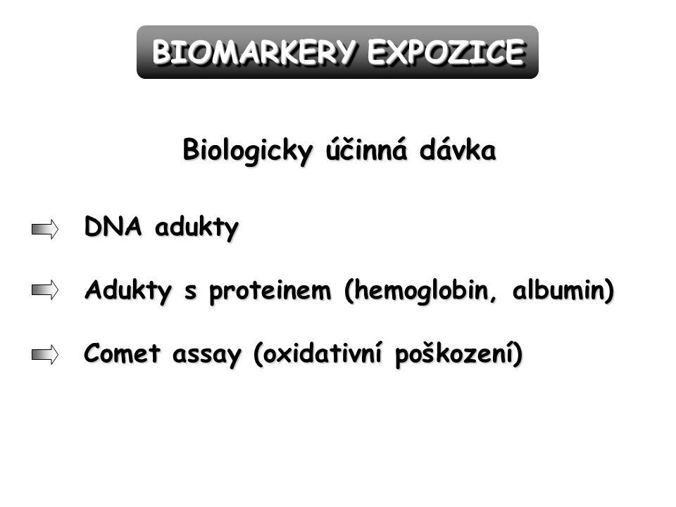 DNA adukty Adukty s proteinem (hemoglobin, albumin) Comet assay (oxidativní poškození) BIOMARKERY EXPOZICE Biologicky účinná dávka