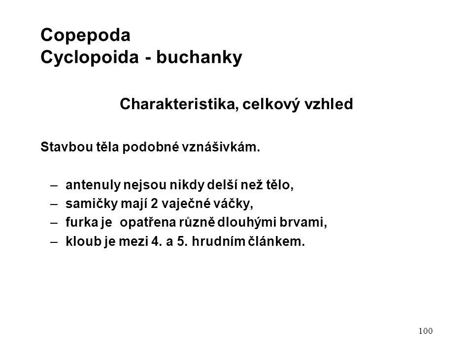 100 Copepoda Cyclopoida - buchanky Charakteristika, celkový vzhled Stavbou těla podobné vznášivkám.