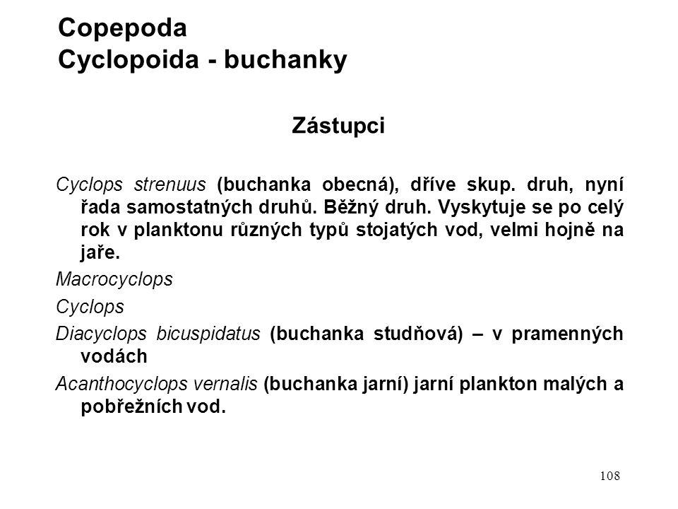 108 Zástupci Cyclops strenuus (buchanka obecná), dříve skup.