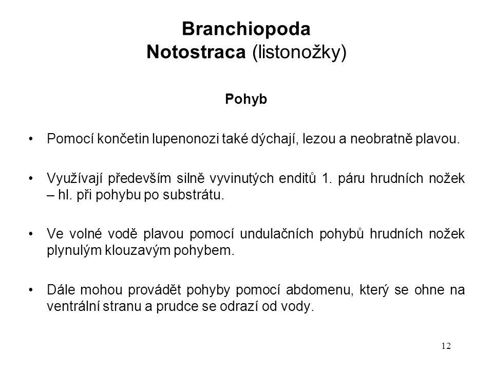 12 Pohyb Pomocí končetin lupenonozi také dýchají, lezou a neobratně plavou.