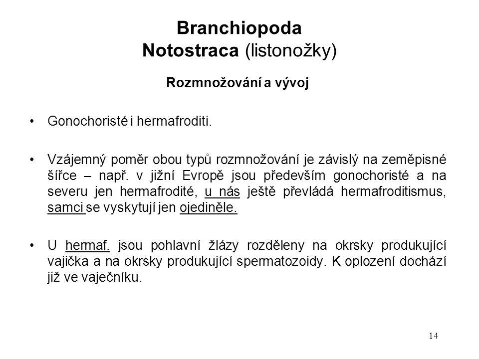 14 Rozmnožování a vývoj Gonochoristé i hermafroditi.