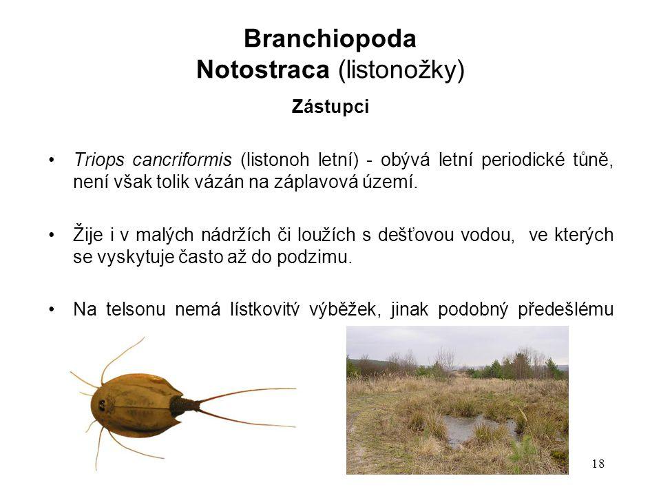 18 Zástupci Triops cancriformis (listonoh letní) - obývá letní periodické tůně, není však tolik vázán na záplavová území.