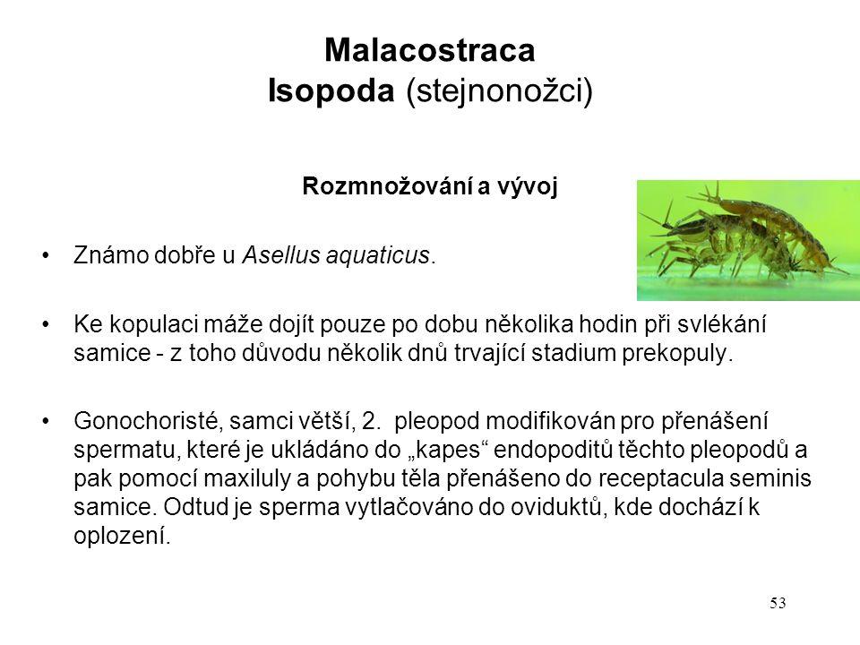 53 Rozmnožování a vývoj Známo dobře u Asellus aquaticus.