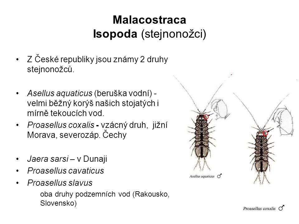 55 Z České republiky jsou známy 2 druhy stejnonožců.