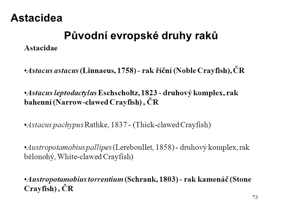 Původní evropské druhy raků Astacidae Astacus astacus (Linnaeus, 1758) - rak říční (Noble Crayfish), ČR Astacus leptodactylus Eschscholtz, 1823 - druhový komplex, rak bahenní (Narrow-clawed Crayfish), ČR Astacus pachypus Rathke, 1837 - (Thick-clawed Crayfish) Austropotamobius pallipes (Lereboullet, 1858) - druhový komplex, rak bělonohý, White-clawed Crayfish) Austropotamobius torrentium (Schrank, 1803) - rak kamenáč (Stone Crayfish), ČR 73 Astacidea