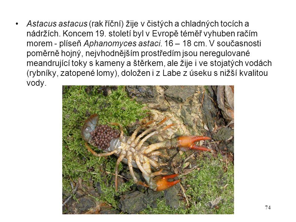 74 Astacus astacus (rak říční) žije v čistých a chladných tocích a nádržích.