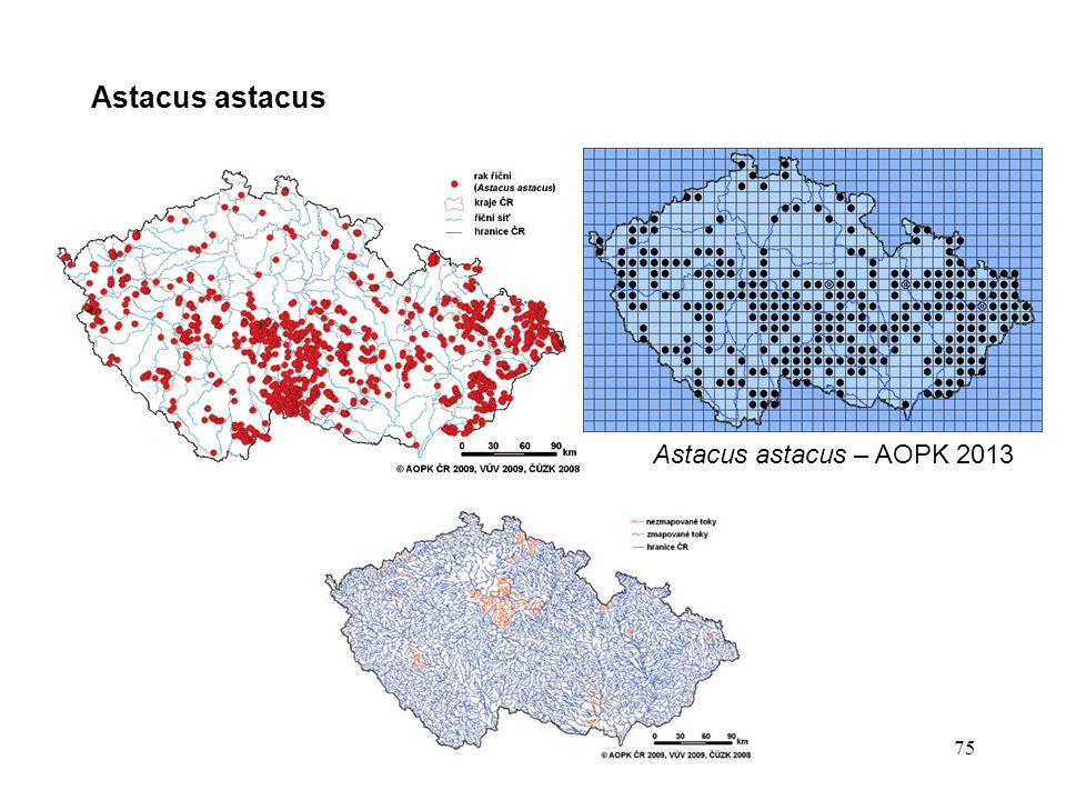 Astacus astacus 75 Astacus astacus – AOPK 2013