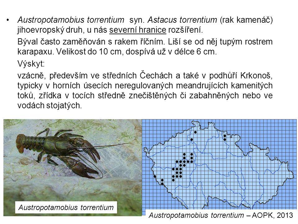 76 Austropotamobius torrentium syn.