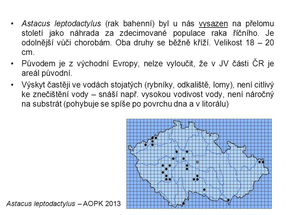 77 Astacus leptodactylus (rak bahenní) byl u nás vysazen na přelomu století jako náhrada za zdecimované populace raka říčního.