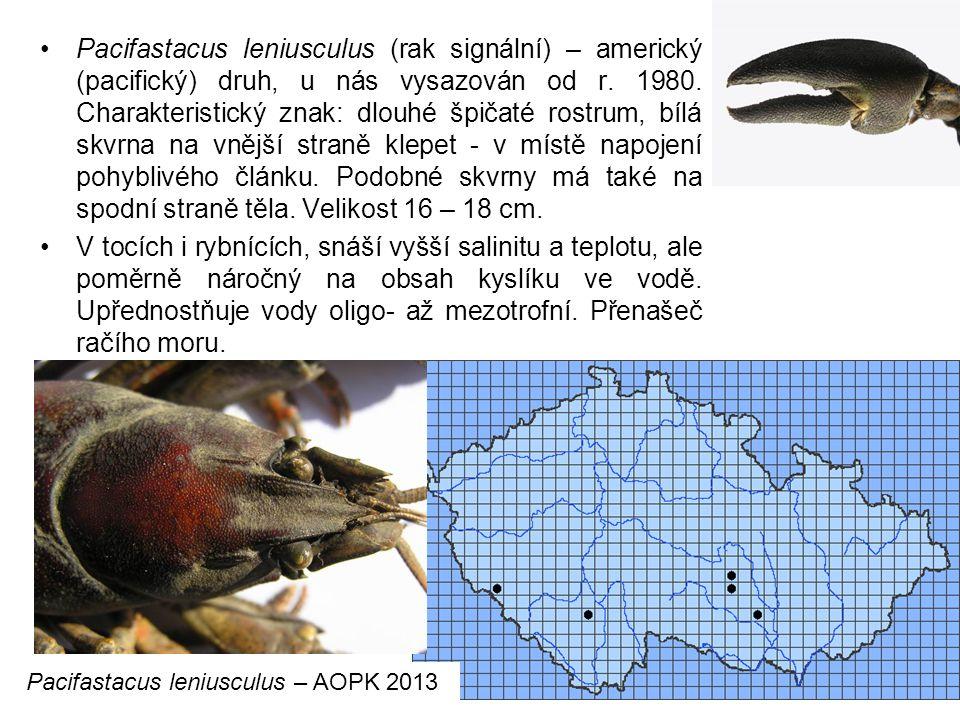 80 Pacifastacus leniusculus (rak signální) – americký (pacifický) druh, u nás vysazován od r.