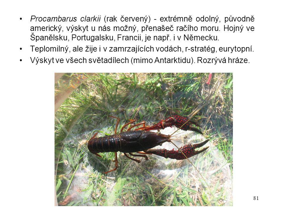 81 Procambarus clarkii (rak červený) - extrémně odolný, původně americký, výskyt u nás možný, přenašeč račího moru.