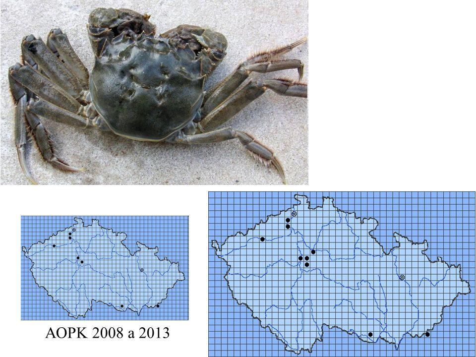 84 Eriocheir sinensis AOPK 2008 a 2013