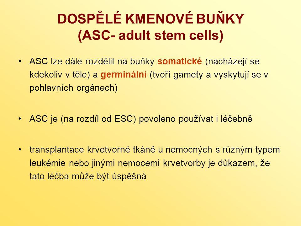DOSPĚLÉ KMENOVÉ BUŇKY (ASC- adult stem cells) ASC lze dále rozdělit na buňky somatické (nacházejí se kdekoliv v těle) a germinální (tvoří gamety a vyskytují se v pohlavních orgánech) ASC je (na rozdíl od ESC) povoleno používat i léčebně transplantace krvetvorné tkáně u nemocných s různým typem leukémie nebo jinými nemocemi krvetvorby je důkazem, že tato léčba může být úspěšná