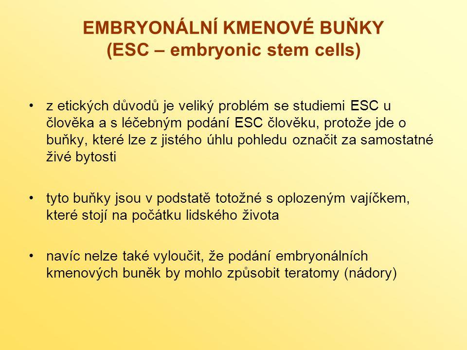 EMBRYONÁLNÍ KMENOVÉ BUŇKY (ESC – embryonic stem cells) z etických důvodů je veliký problém se studiemi ESC u člověka a s léčebným podání ESC člověku, protože jde o buňky, které lze z jistého úhlu pohledu označit za samostatné živé bytosti tyto buňky jsou v podstatě totožné s oplozeným vajíčkem, které stojí na počátku lidského života navíc nelze také vyloučit, že podání embryonálních kmenových buněk by mohlo způsobit teratomy (nádory)