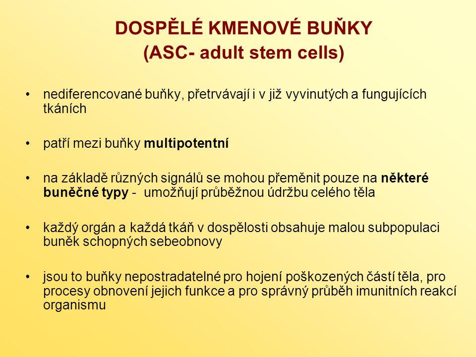 DOSPĚLÉ KMENOVÉ BUŇKY (ASC- adult stem cells) k reprogramování (přeprogramování) ASC může dojít in vivo – např.