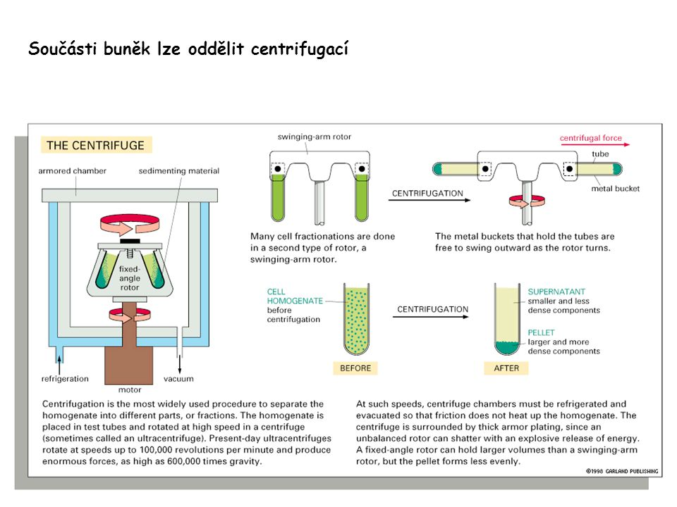 Součásti buněk lze oddělit centrifugací