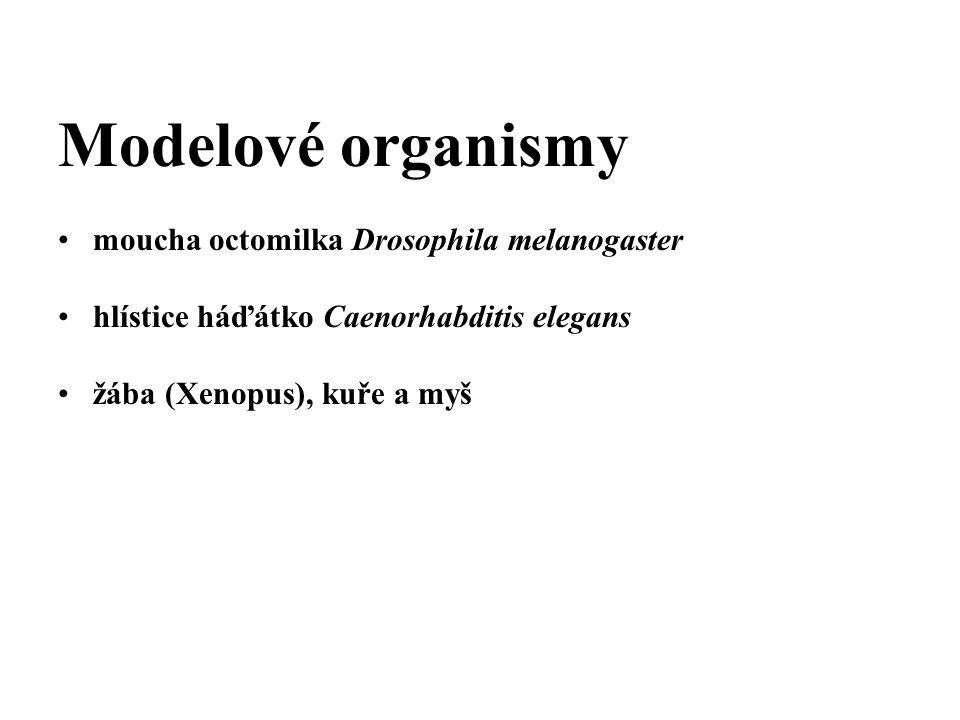 Modelové organismy moucha octomilka Drosophila melanogaster hlístice háďátko Caenorhabditis elegans žába (Xenopus), kuře a myš