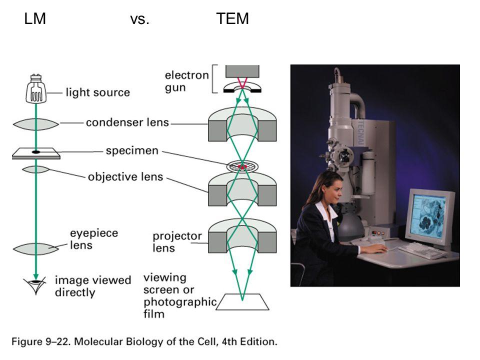 LM vs.TEM