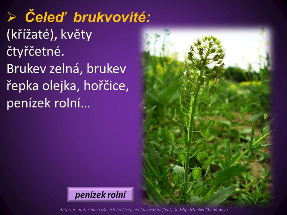  Čeleď brukvovité: (křížaté), květy čtyřčetné. Brukev zelná, brukev řepka olejka, hořčice, penízek rolní… penízek rolní Autorem materiálu a všech jeh